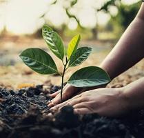 Tree plantation of Vedic period is still contemporary